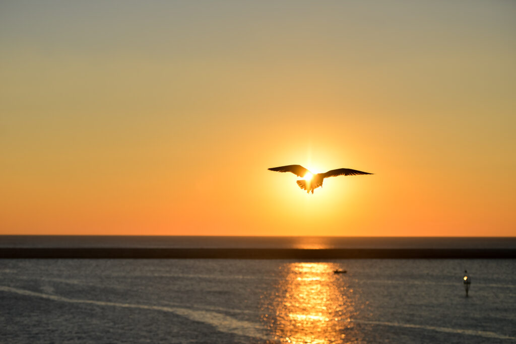 sea sunset bird flying